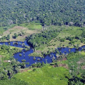 Cisneros, Börner et al. 2019 - Impacts of Conservation Incentives in Protected Areas Case of Bolsa Floresta Brazil